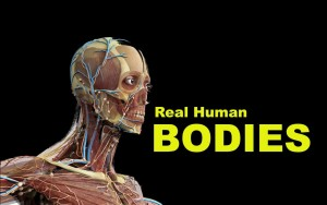 Real Human Bodies Hengelo